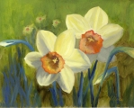 Shire-Daffodils